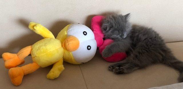 kedi_sahiplenme