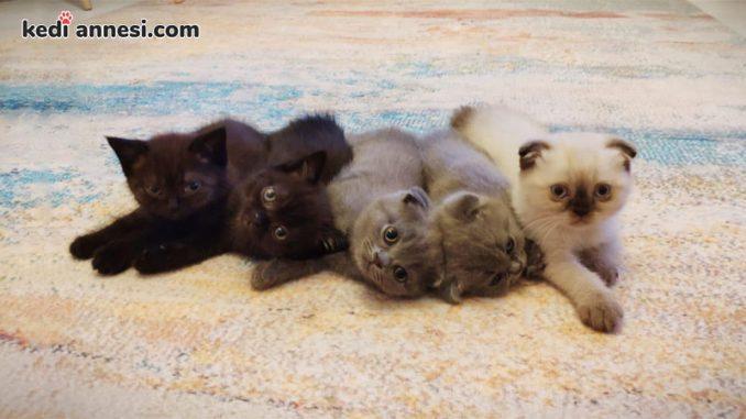 Yavru-Kedi-Beslenmesi