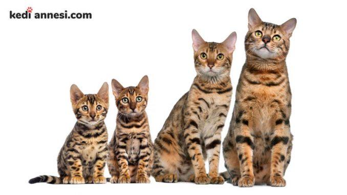 kedilerin_ortalama_omru