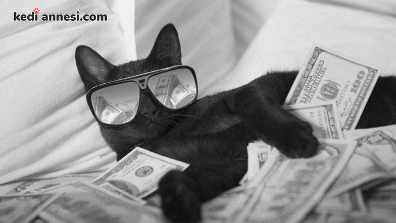 kedi-sahiplenme-kedi-sahiplenmek-kedi-masraflari