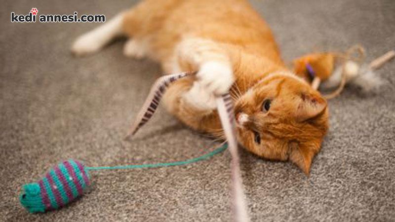 kedi-sahiplenme-kedi-sahiplenmek-kedi-oltası-oyun-oynayan-kedi