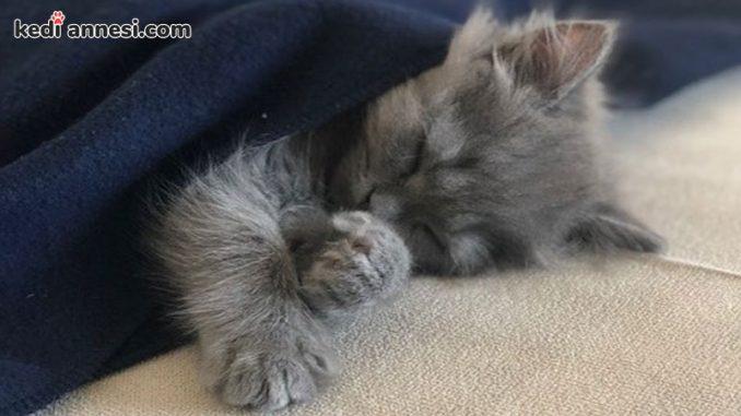 kedi-sahiplenme-kedi-sahiplenmek-uyuyan-yavru-kedi