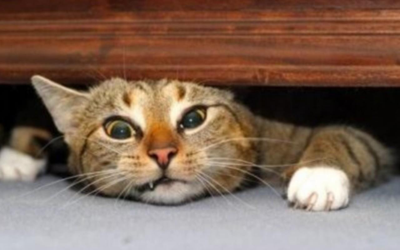 kedi stresi