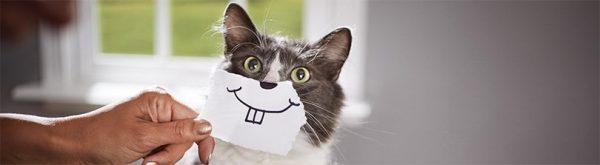 kedi-dis-bakimi