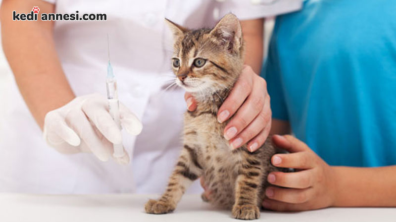 kedi-asi-cesitleri-karma-asi-ic-dis-parazit-tedavisi-kuduz-asisi