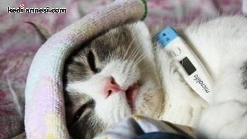 kedi-hastalıkları-kuduz-kedilerde-kuduz-belirtileri