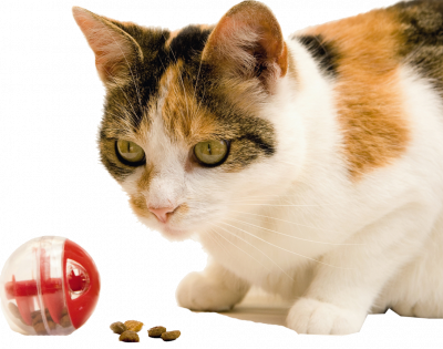 kedi-odul-maması