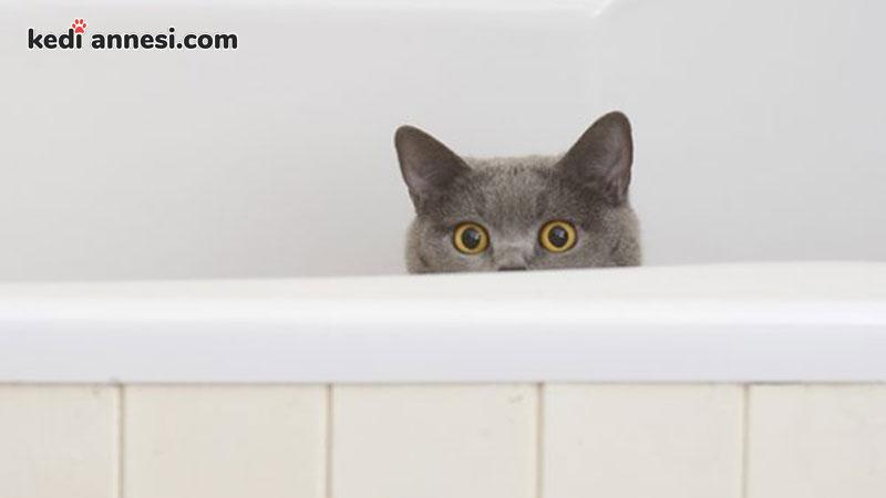 kedi-tuvalet-egitimi-kedim-kumuna-yapmiyor