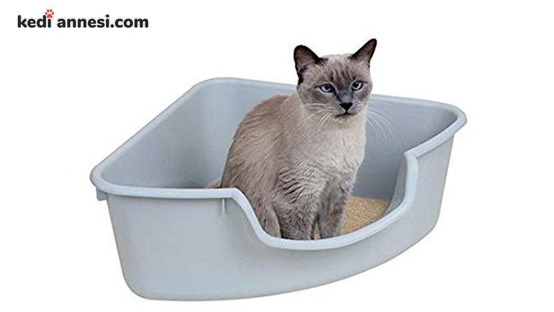 kedi-tuvalet-egitimi-yavru-kedi-cis-egitimi