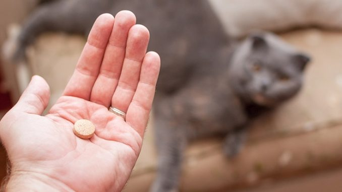 kedi-vitaminleri