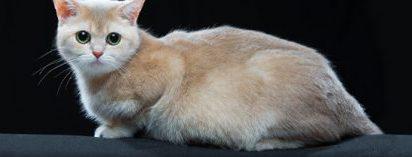 kedilerde-hamilelik-kedilerde-ozel-beslenme-gerektiren-durumlar