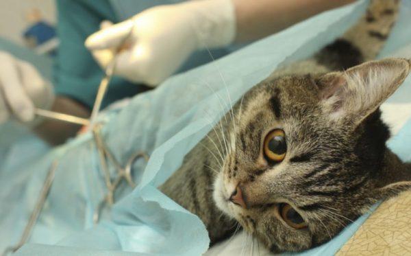 kedilerde-kisirlastirma-kedilerde-ozel-beslenme-gerektiren-durumlar