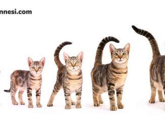 kedilerin-yasi-kedi-hayat-dongusu-kedi-ailesi
