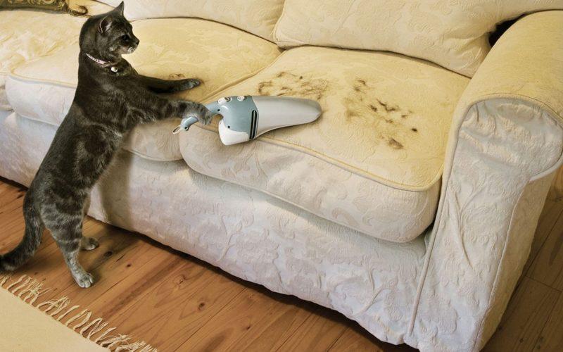 kedilerde tüy dökülmesi
