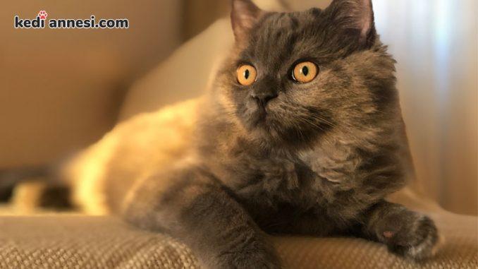 dunya-kediler-gunu-uluslararasii-kediler-günü