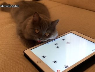 kedi-oyunu-oynayan-kedi-kedi-oyunu-iphone-uygulamasi-kedi-oyunu-ipad-uygulamasi