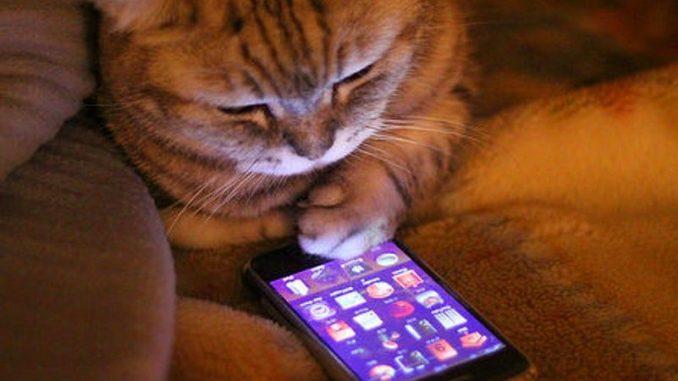 kedi-asi-takvimi-kedi-asi-takibi-kedi-asi-tarihleri-kedi-asiları