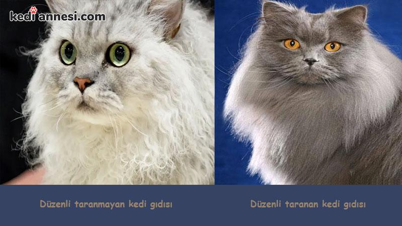 kedilerde_tuy_bakimi_duzenli_tarama