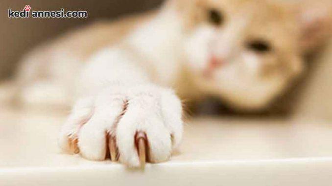 kedilerin_tirnagi_nasil_kesilir