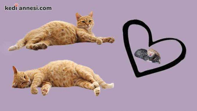 kedilerin_hamileligi
