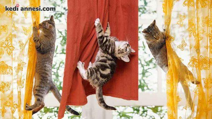 kedileri perdelerden uzak tutmak