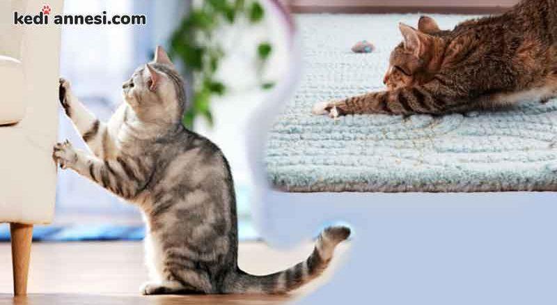 kedilerin_kanepeleri_tirmalamasini_engellemek