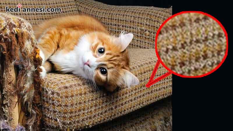 kedim_koltuklari_tirmaliyor